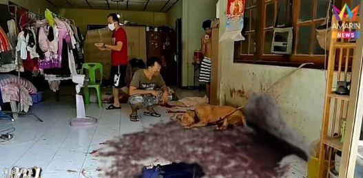 惨不忍睹!一男子与爱犬同床共眠,半夜被撕咬致死!(组图)