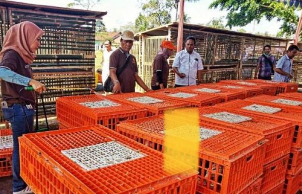 为维护养殖户利益,农业部PKH力保家禽市场企稳