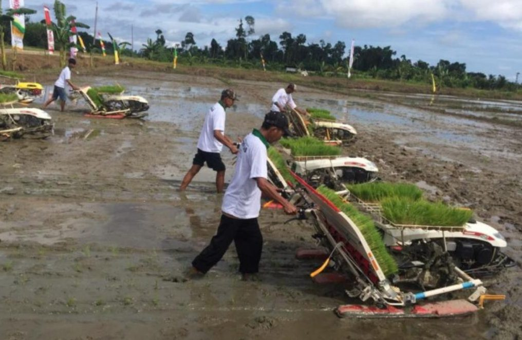 副总统:鼓励印尼家庭从事农业或种植生产