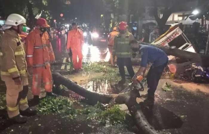 牛肉丸小贩损失 500 万印尼盾,当大雨期间摊位被倒下的树木压坏
